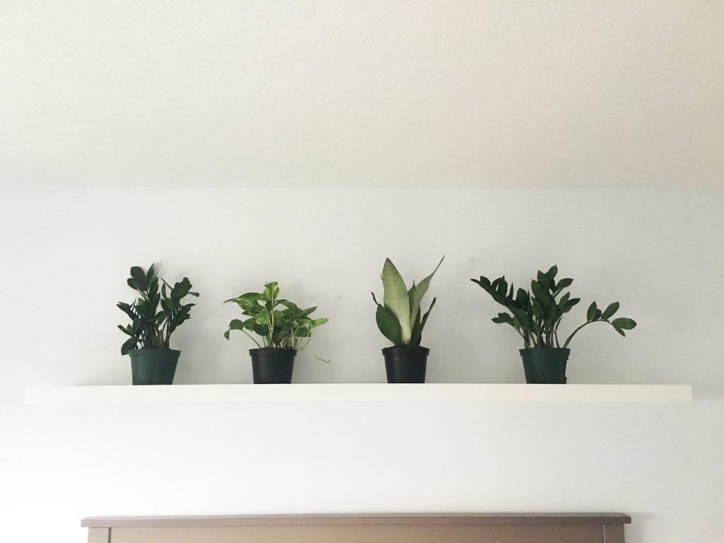 plant shelf ikea