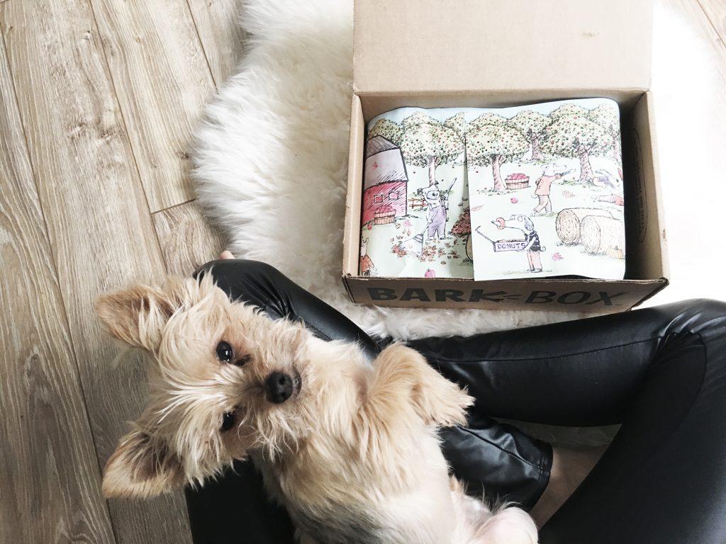 BarkBox Reveal